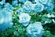 http://thumbnails26.imagebam.com/10077/833d96100765575.jpg