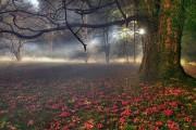 http://thumbnails26.imagebam.com/10077/f54420100765711.jpg