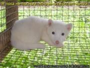 http://thumbnails26.imagebam.com/10262/a2e591102617319.jpg