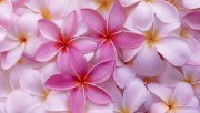 Flowers and Gardens HQ wallpapers Collection 1 C121c5108223588