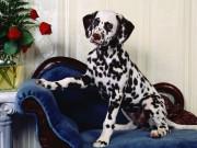 Cuteeeeee Animals wallpapers 3ab636108284715