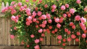 Flowers and Gardens HQ wallpapers Collection 2 Da07cd108363846