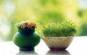 Green Plants Birth HD Wallpapers 36d1dc108975477