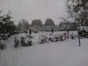 The Snow 2010 A3b7d5110168446